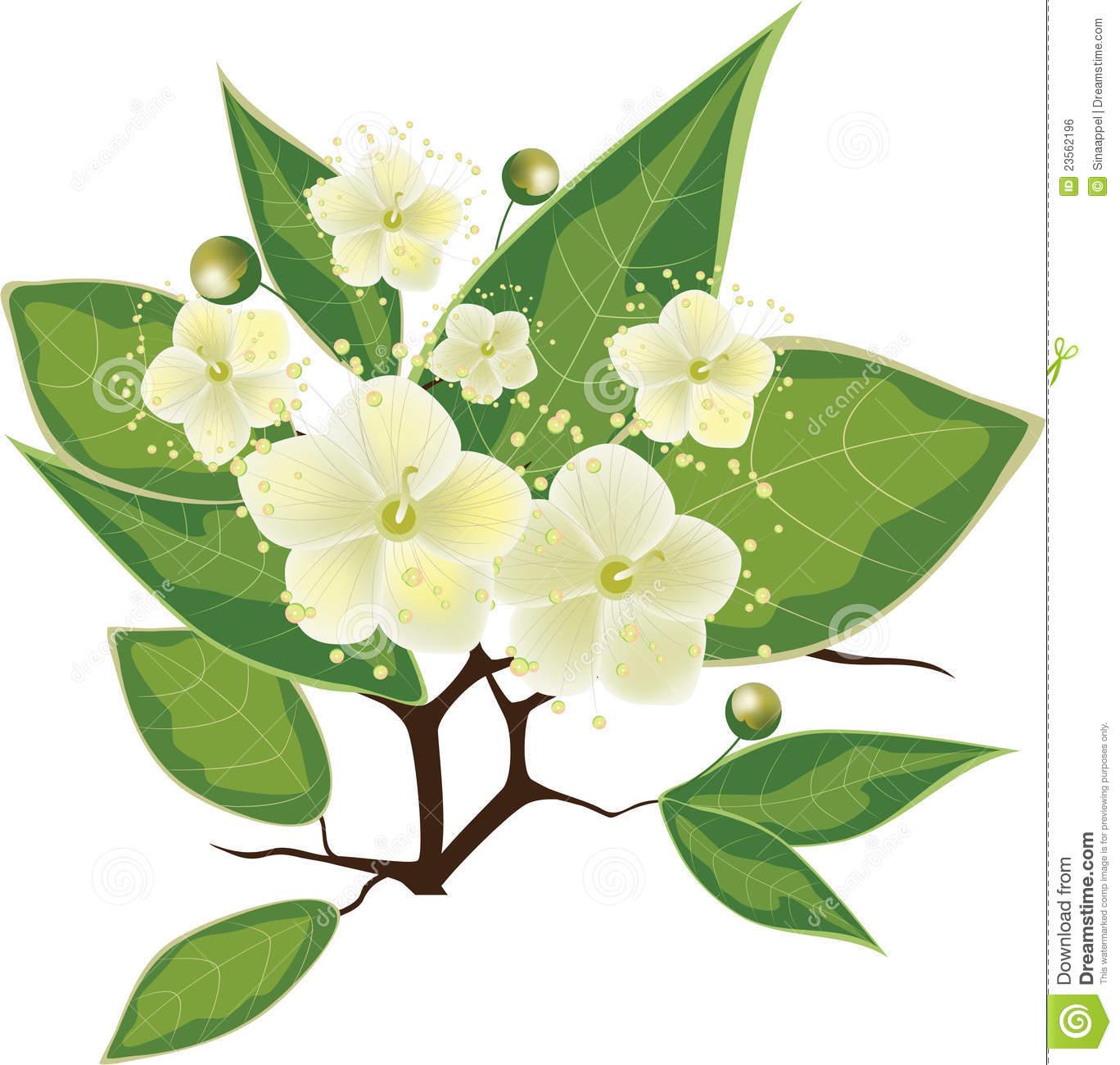 filiale-di-fioritura-del-mirto-illustrazione-di-vettore-23562196